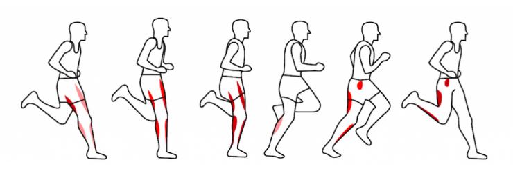 Muscles et course à pied (Source: borntorun.com)