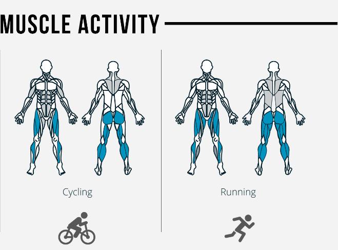 Muscles utilisés à la course VS vélo (Source: me-mover.com)