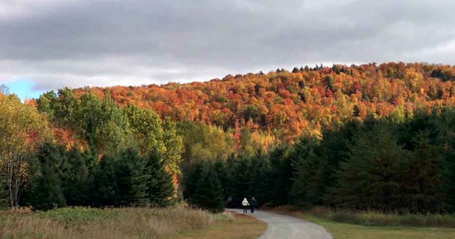 Marathon d'automne au Québec